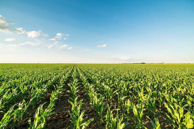 Corn Extends Gains but Shows Signs of Exhaustion, Soybeans Advances