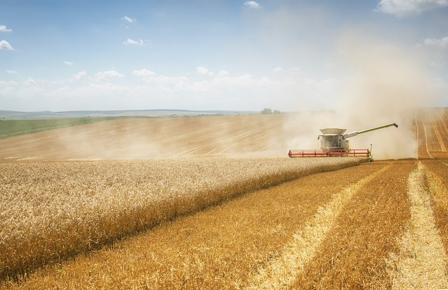 Soybean Down Friday but Positive on Week; Russia's Wheat Export Estimates Down