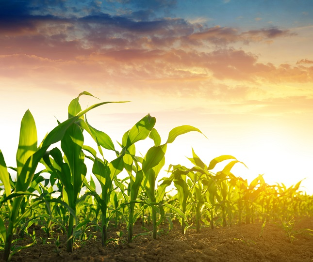 Grains Positive Amid Hot Weather Conditions, Ahead of Fed