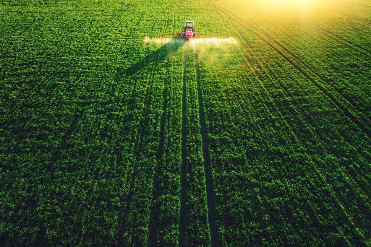Negative Week for Grain Prices Due to Weather and Optimism in Trade