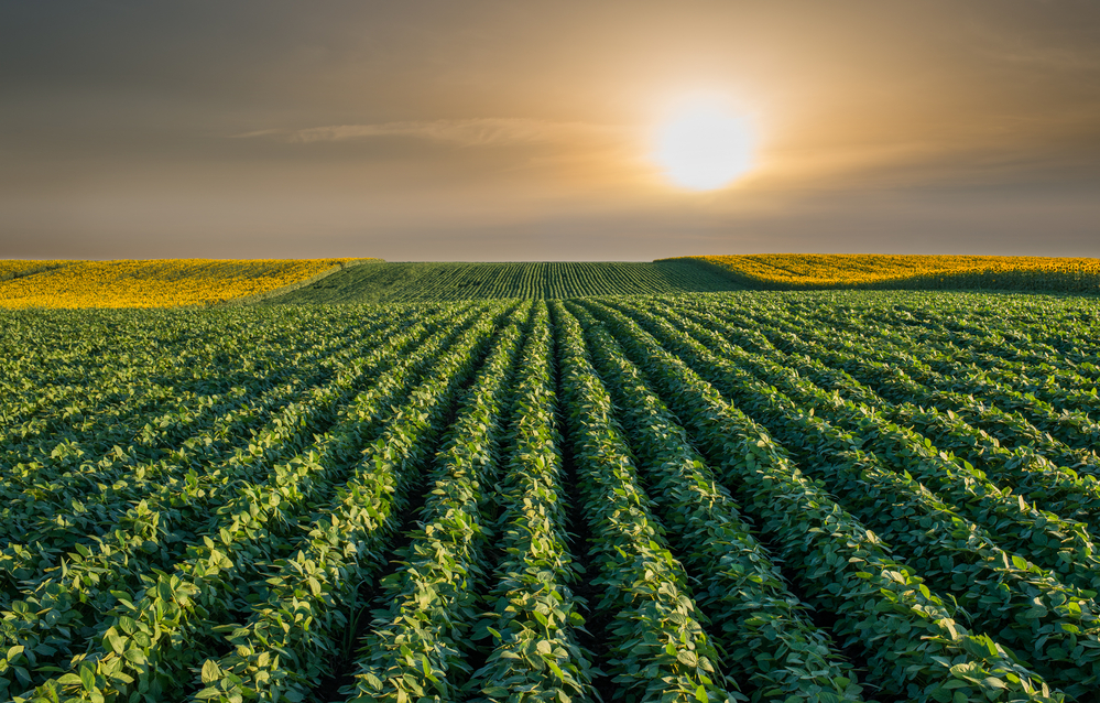 Organic Soybean Prices Remain Robust as Trend in Organic Chicken Retail Sales Rise