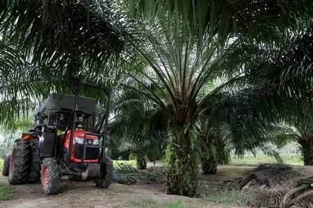 Global Edible Oil Prices near Their Peak, but Retreat May be Slow