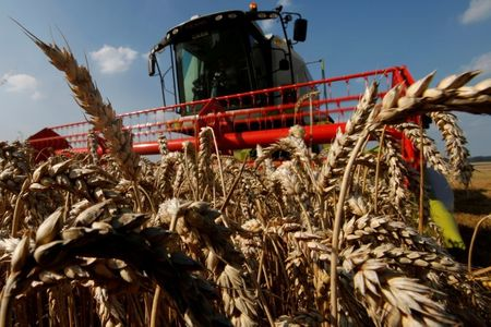 World Food Prices Jump in Aug, Cereal Harvest Outlook Cut – FAO