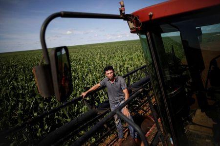 Paraná registra plantio de 3% do milho da nova safra; vê avanço da colheita 20/21