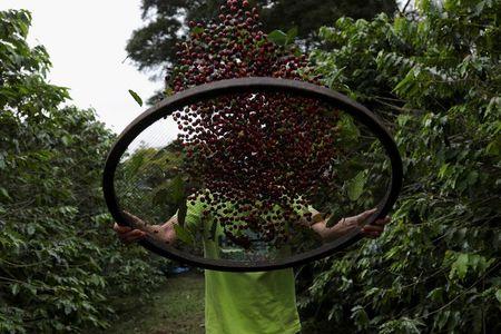 Brasil vê queda de 22,6% na safra de café; área em formação sinaliza avanço futuro